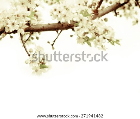 painting with soft tree flowers on a twig - stock photo