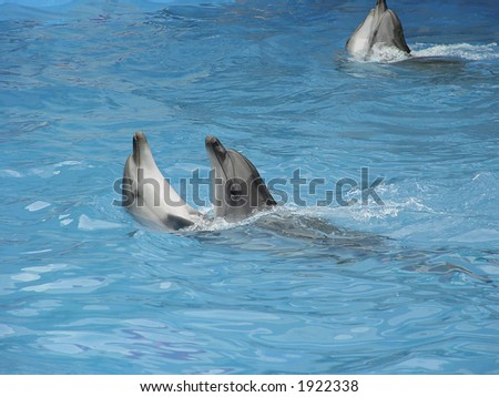 Pair dolphins dance in light-blue water. Are turned under pleasant music. - stock photo