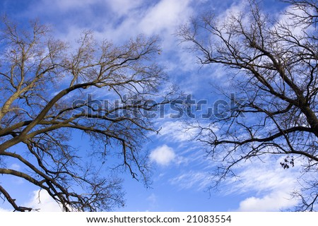 Pair in Heaven. Autumn oak trees on blue sky backgrounds - stock photo