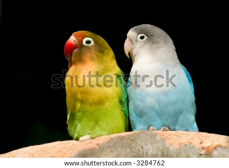 Pair of charming birds. - stock photo