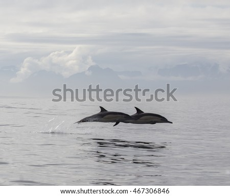 Pair of dolphins is jumping out of the ocean