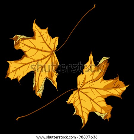 Pair of Falling Down Maple Leafs on Black Background. Rasterized Version - stock photo