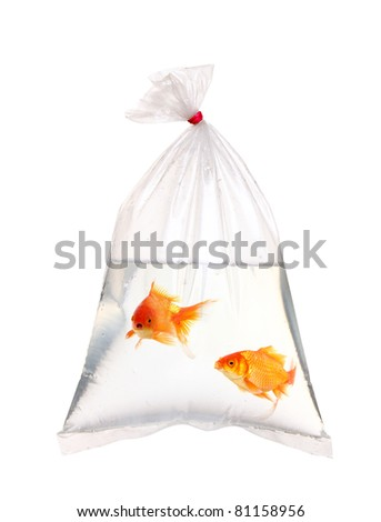 Pair of gold fish in the water packet - stock photo