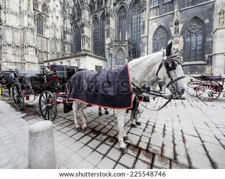 Pair of nice horses in plaid blankets and caps carry the carriage through the Vienna streets. Carriage horses at Stephansdom Cathedral in Austria.  - stock photo