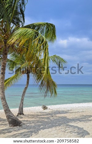 Pair of palm trees on a tropical sand beach in front of blue ocean, Dominican Republic