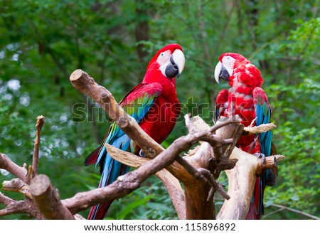 pair of parrot bird sitting on the perch - stock photo