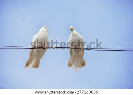 Pair of white doves sitting on a wire against the blue sky - stock photo