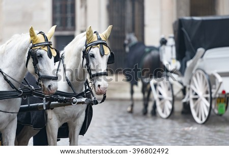 Pair of white horses and retro carriage on stefansplatz in Vienna, Austria. Europe travel.
