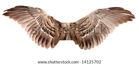 Pair of wings isolated on white - stock photo