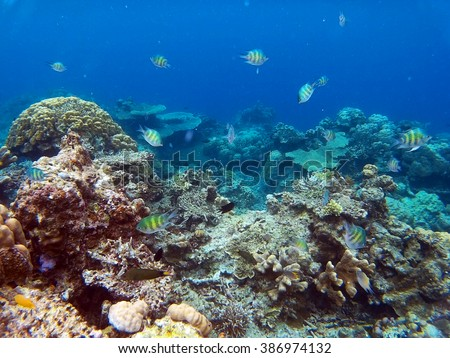 PALAWAN/PHILIPPINES - CIRCA DECEMBER 2015: Colorful underwater life on the coral reef in the ocean around El Nido archipelago - stock photo