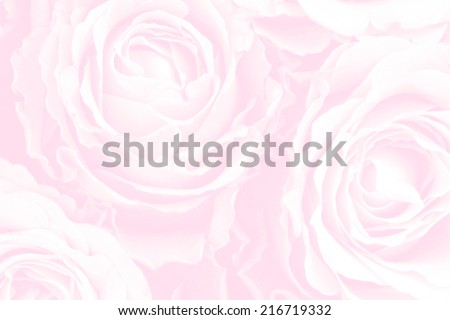 Pale background of red roses - stock photo