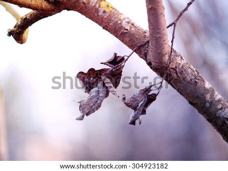 Chrysalis Butterfly Hanging On Trees Stock Photo 511081552