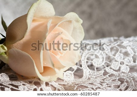 Pale pink rose on a wedding lace. - stock photo