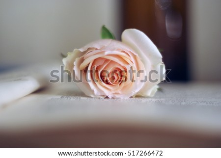 Pale pink single rose on the open old book