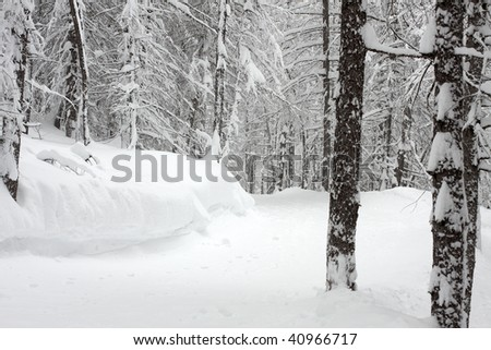Pale winter forest with trees covered by snow - stock photo