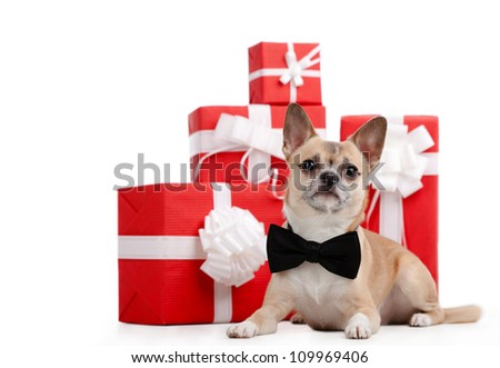 Pale yellow doggy with bow tie lies near the presents, isolated on white - stock photo