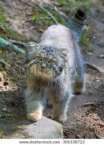 camera manul In the previous lesson we covered the basic settings on your camera today we're jumping into the fun stuff: manual mode we'll learn the details about shutter speed, iso, and aperture, as.