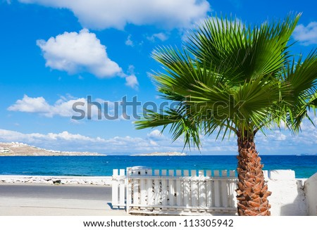 palm against the blue sea and sky with clouds. Mykonos Island. - stock photo