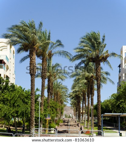 Palm alley in a new district of Eilat city, Israel - stock photo