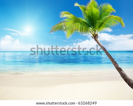 palm and beach