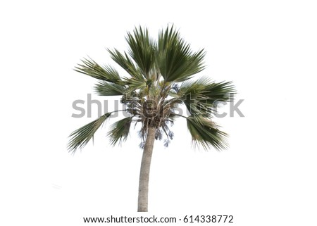 palm and green leaf with seed,isolated on white