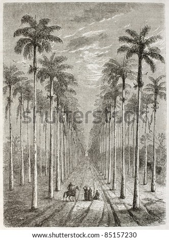Palm avenue in front of Cuban house. Created by Berard, published on Le Tour du Monde, Paris, 1860. - stock photo