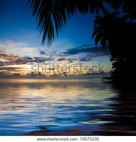 Palm Bliss - stock photo