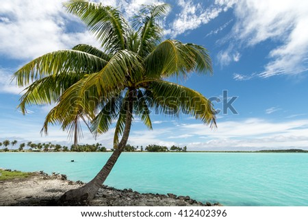 Palm Bora Bora island French Polynesia 2016 - stock photo