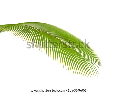 palm branch on a white background - stock photo