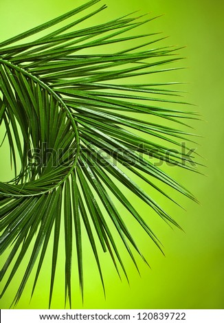 Palm branches fan border on the green background - stock photo