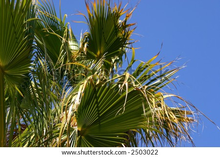 Palm foliage against clear blue sky - stock photo