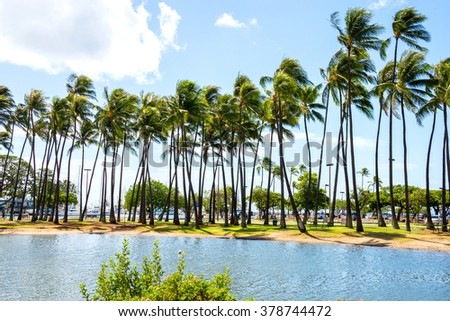 Palm forest growing by the ocean on Hawaii