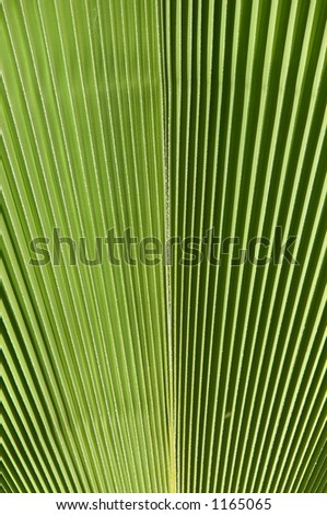 Palm Frond - stock photo