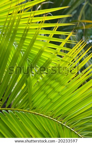 Palm fronds - stock photo