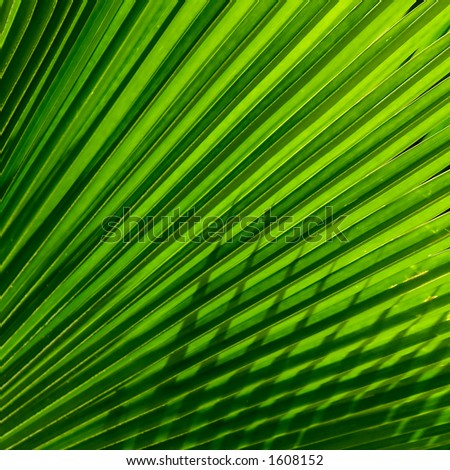 Palm fronds provide a study in light and shadow. - stock photo