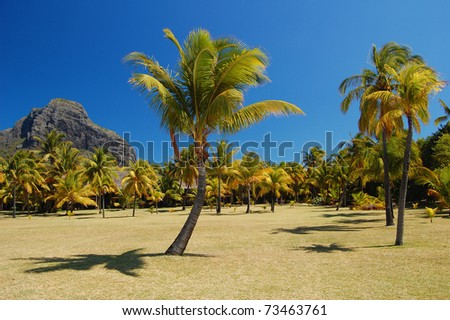 Palm garden with bungalows in tropical resort on Mauritius Island