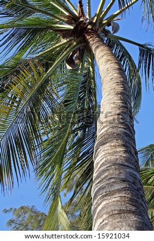 Palm in Kenya, holiday, Indian Ocean - stock photo