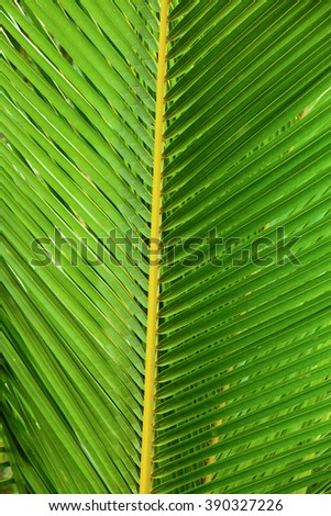 palm leaf abstract background