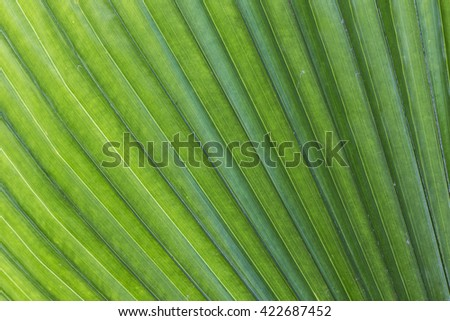 Palm leaf background - stock photo