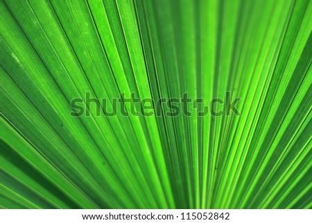Palm leaf closeup - stock photo