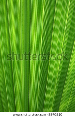 palm leaf detail abstract background texture - stock photo