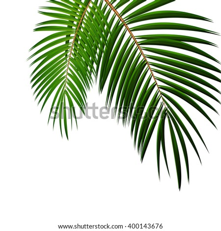Palm Leaf on White Background with Place for Your Text Illustration  - stock photo