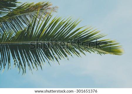 Palm leaf over blue sky background - stock photo