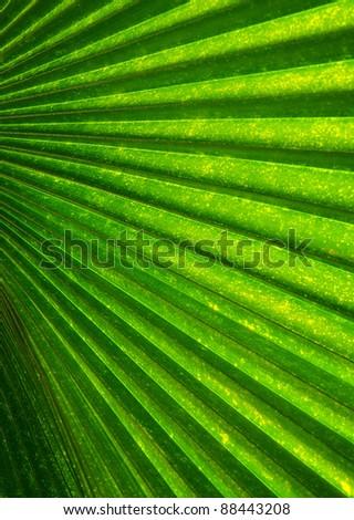 palm leaf pattern - stock photo