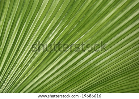 Palm Leaf Pattern and copy space.