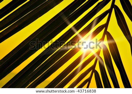 Palm leaf silhouette and sun beams at sunset - stock photo