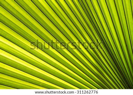 Palm Leaf texture and shadow