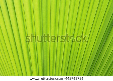 Palm leaf texture or background