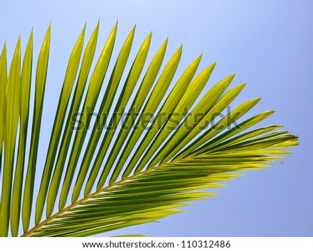 palm leaf viewed against bright sunlight on sky background
