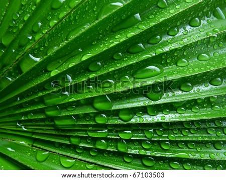 palm leaf with rain drops - stock photo